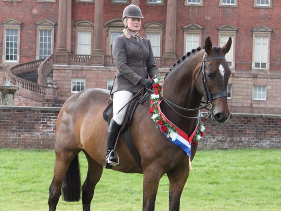 Horse&rider landscape